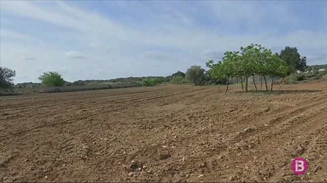 La+Cooperativa+del+camp+de+Formentera+compta+ja+amb+276+hect%C3%A0rees+al+cens+de+terres