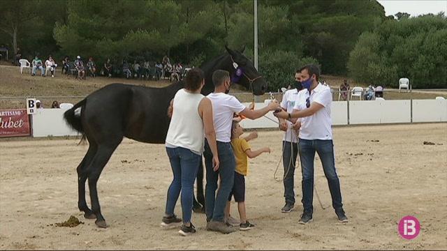 90+cavalls+participen+en+la+30a+edici%C3%B3+del+Concurs+Morfol%C3%B2gic+de+Ra%C3%A7a+Menorquina