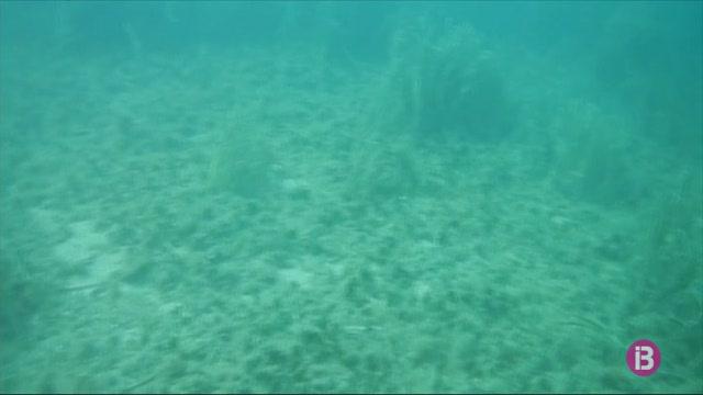 30+activitats+per+difondre+la+major+reserva+de+biosfera+marina+de+la+Mediterr%C3%A0nia