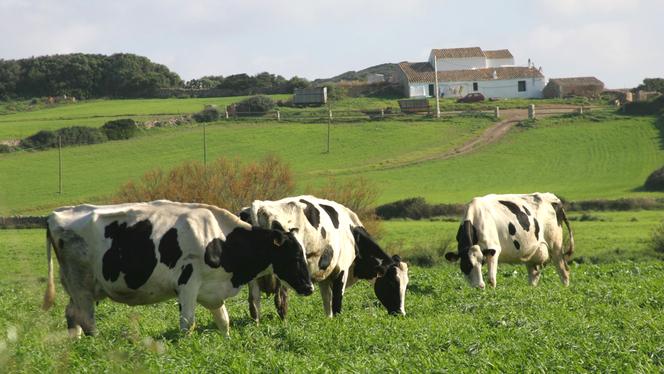 Els+pagesos+de+Menorca+i+Mallorca+compren+un+40%2525+m%C3%A9s+de+farratges+que+l%26apos%3Bany+passat