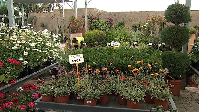 El+sector+de+les+flors+perd+el+per%C3%ADode+de+facturaci%C3%B3+m%C3%A9s+important+de+l%27any