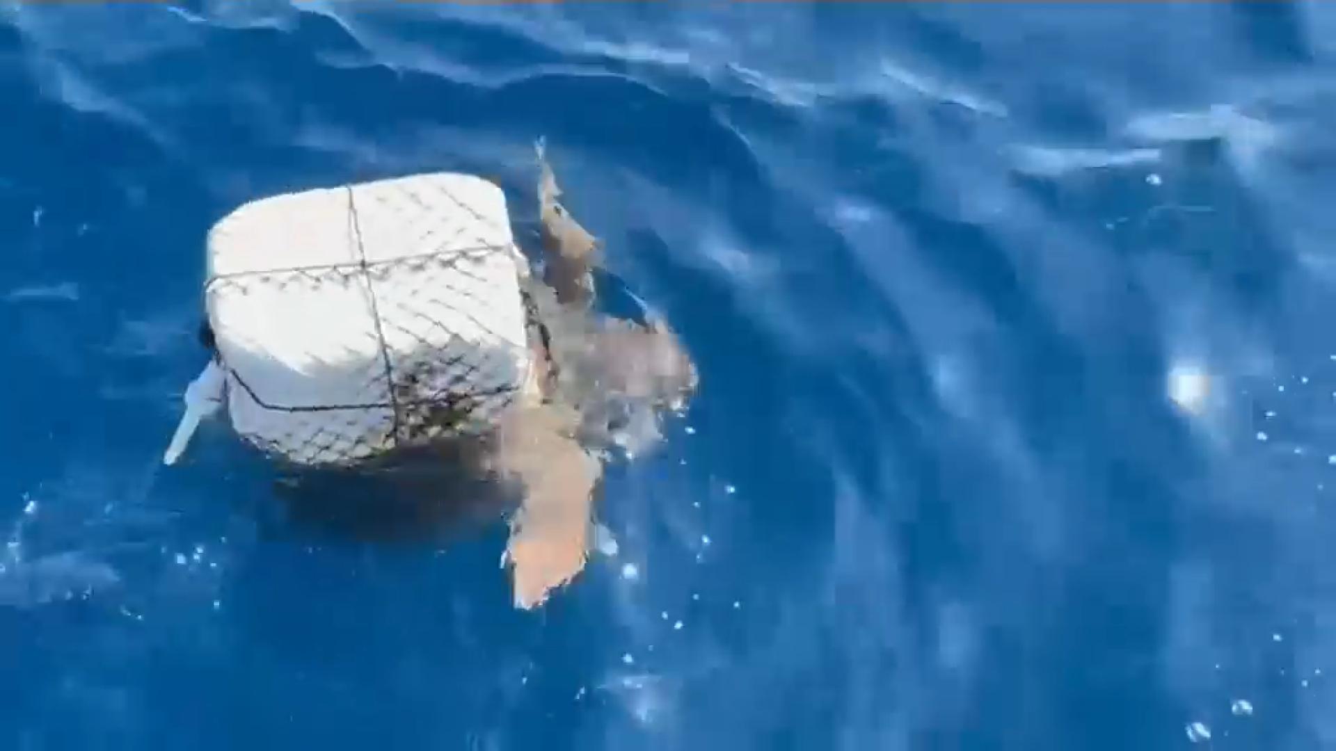 Com+es+rescata+una+tortuga%3F