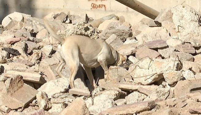 Els+Bombers+d%27Eivissa+entrenen+cans+per+rescatar+persones