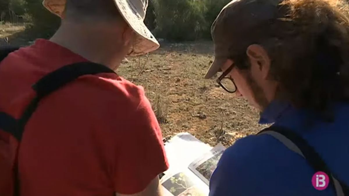 El+GOB+fa+una+crida+a+Menorca+per+cercar+voluntaris+de+bioindicadors