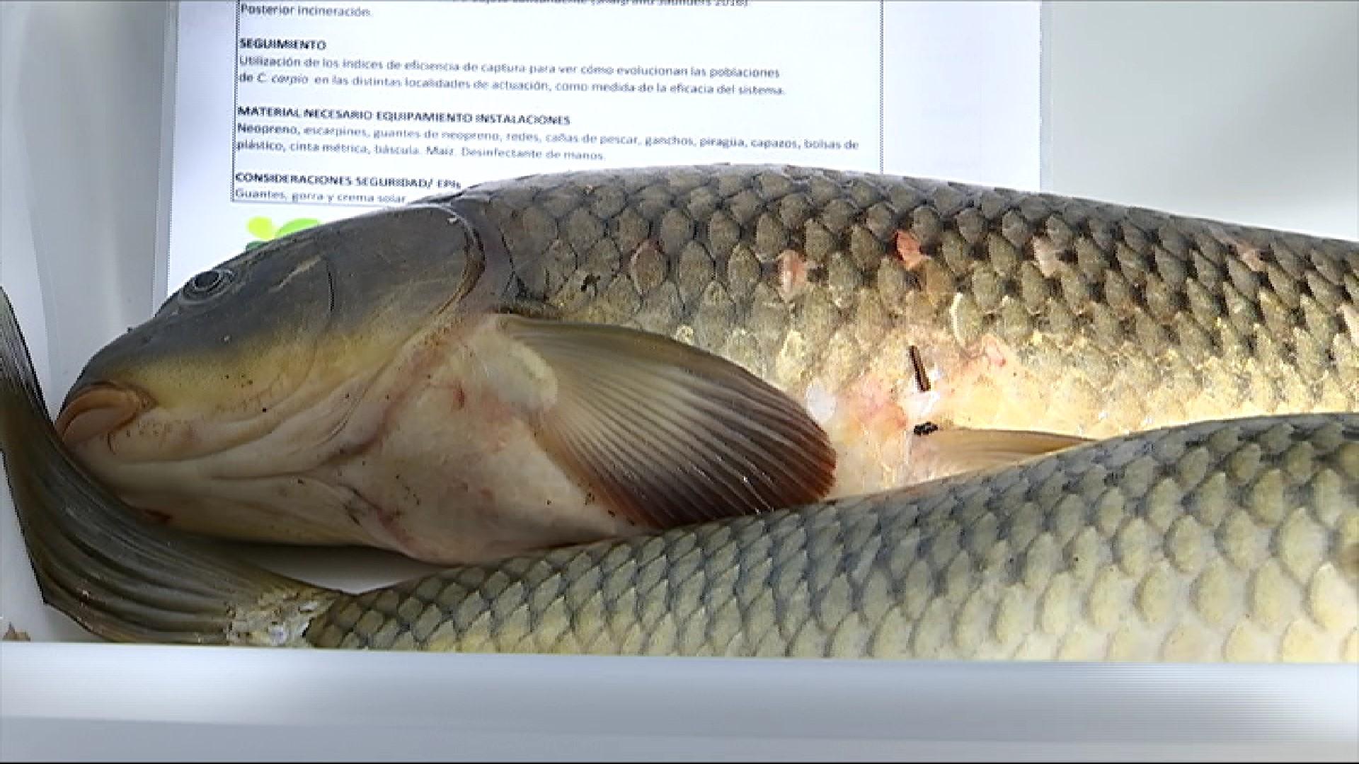 Multen+tres+pescadors+furtius+al+Parc+Natural+de+l%27Albufera