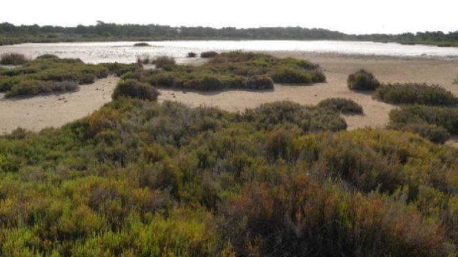 WWF+demana+al+Govern+promulgar+un+decret+per+protegir+les+zones+humides+de+les+Balears