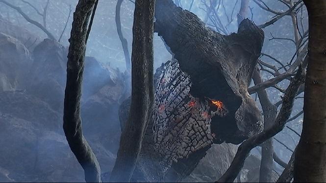 Extingit+un+incendi+forestal+entre+Bunyola+i+Orient