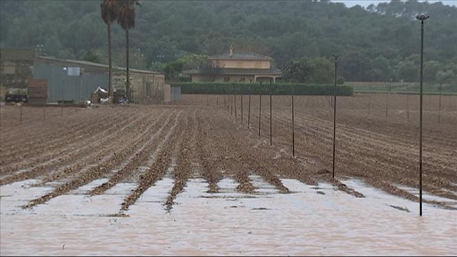Les+pluges+inunden+els+camps+de+patates+a+sa+Pobla