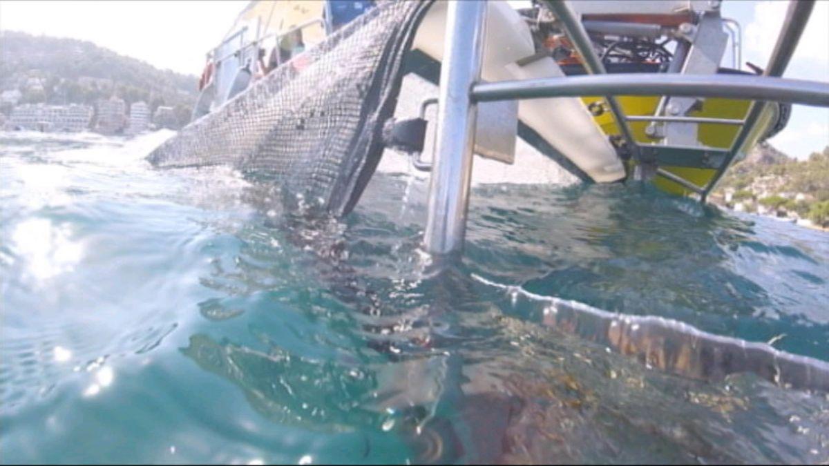 Les+barques+de+neteja+del+litoral+han+retirat+66.283+quilos+en+153+dies