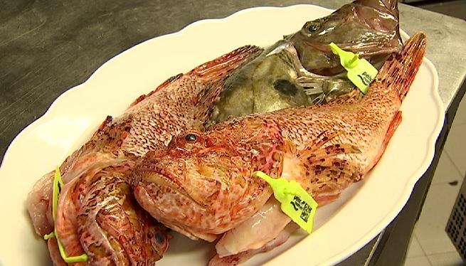 Menys+captures+de+peix+eivissenc+i+m%C3%A9s+qualitat+dels+exemplars