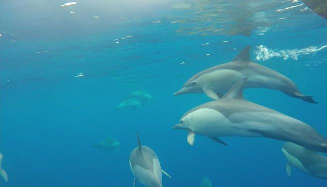 Aix%C3%AD+sonen+els+dofins+a+Eivissa