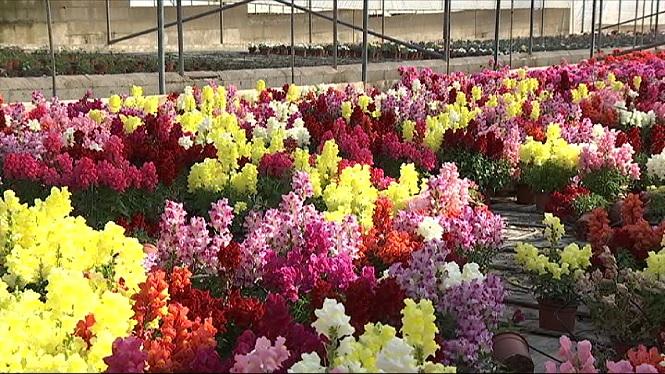 Les+plantes+i+flors+de+viver+es+perdran+perqu%C3%A8+no+s%27han+pogut+vendre