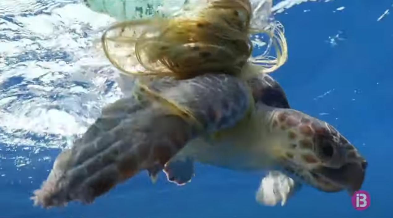 Un+pescador+allibera+una+tortuga+marina+enredada+en+pl%C3%A0stic+a+Menorca