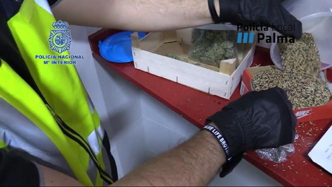 Detingudes+15+persones+a+Palma+per+un+delicte+de+tr%C3%A0fic+de+drogues