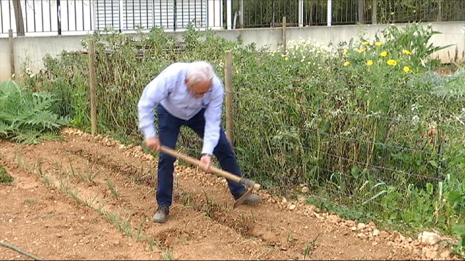 Els+productors+d%27agricultura+ecol%C3%B2gica+demanen+que+es+permetin+els+despla%C3%A7aments+als+horts+d%27autoconsum