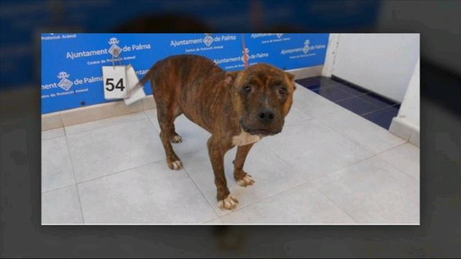 Investiguen+el+robatori+de+dos+dos+cans+a+Son+Reus