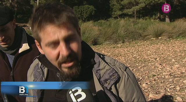 Recollida+accidentada+del+pi+de+Sant+Antoni+a+la+finca+de+Ternelles
