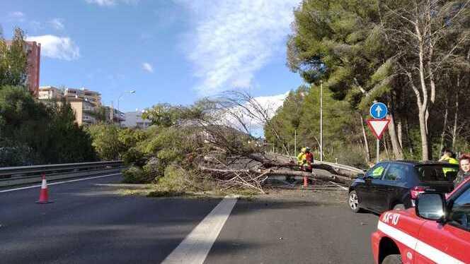 Els+efectes+dels+forts+vents+a+Mallorca%3A+vols+desviats%2C+arbres+caiguts+i+cases+danyades