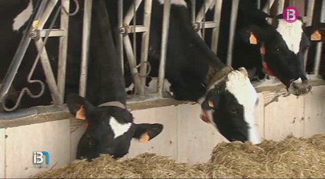 Campos+susp%C3%A8n+el+concurs+de+vaca+frisona+de+la+fira+de+maig