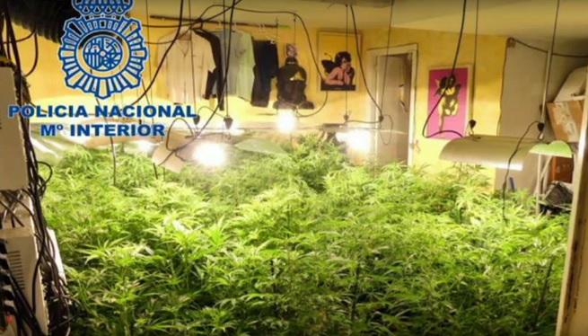 Quatre+detinguts+en+una+operaci%C3%B3+on+s%27han+confiscat+700+plantes+de+marihuana