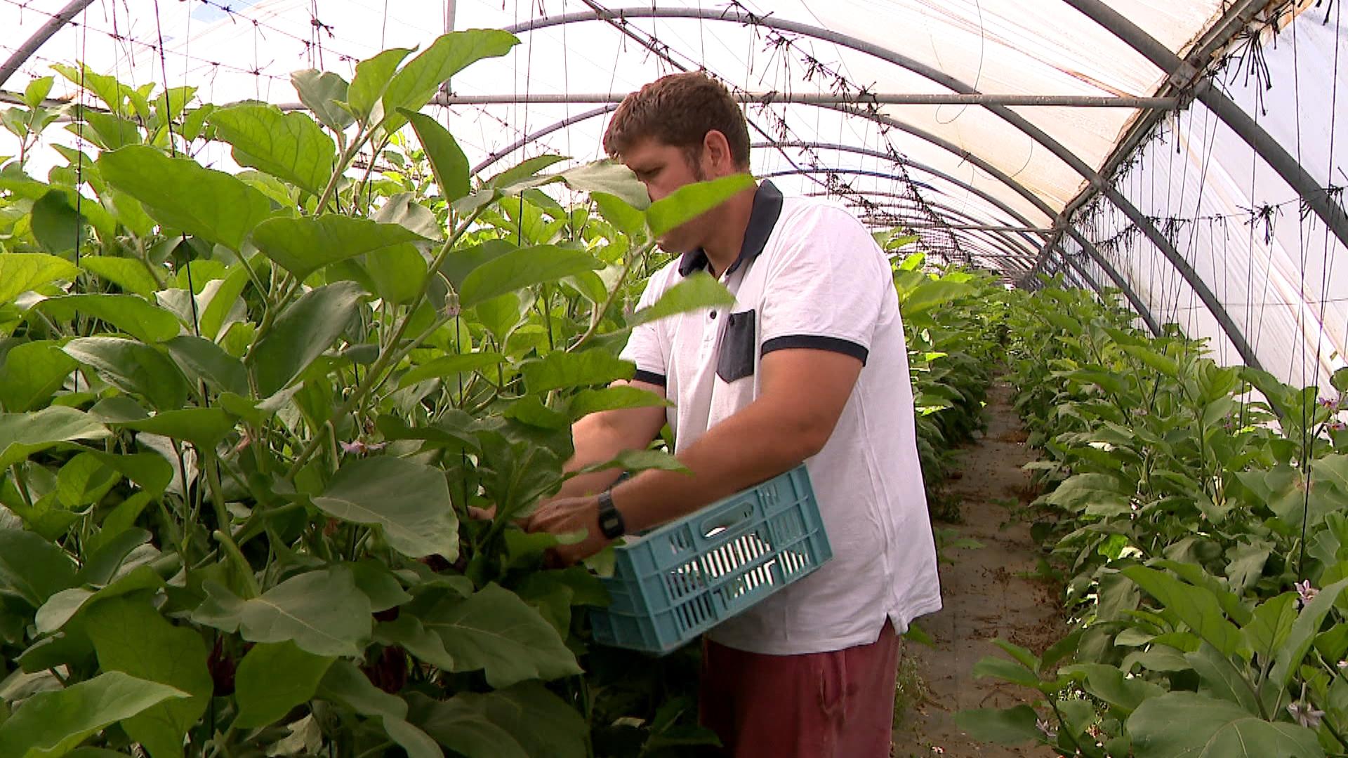 Els+productors+d%27hortalisses+i+fruites+de+Menorca+recelen+de+les+subvencions+per+nova+hect%C3%A0rea+plantada