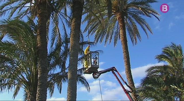 Cau+la+incid%C3%A8ncia+del+becut+vermell+a+Formentera