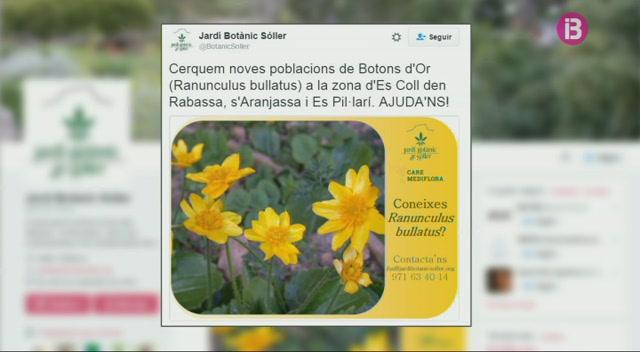 El+Jard%C3%AD+Bot%C3%A0nic+de+S%C3%B3ller+cerca+una+flor