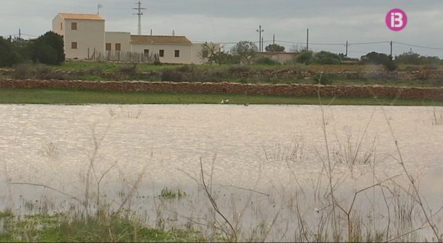 Formentera+posa+a+disposici%C3%B3+dels+pagesos+restes+de+poda+per+abonar+camps