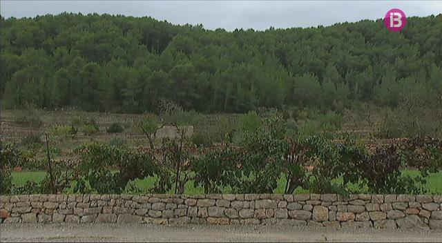 Detectada+a+Eivissa+la+subesp%C3%A8cie+pauca+de+Xylella+Fastidiosa