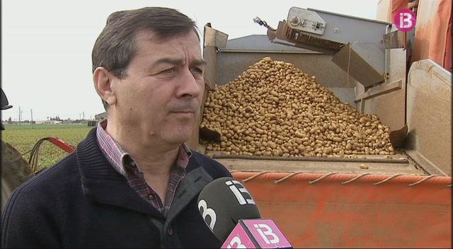Comen%C3%A7a+la+campanya+d%27exportaci%C3%B3+de+la+patata+poblera