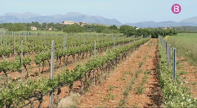 Preocupaci%C3%B3+entre+els+viticultors+de+Mallorca+pels+efectes+dels+herbicides