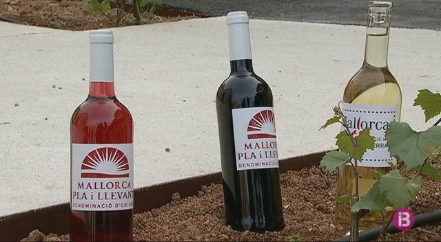 Felanitx+recupera+l%27estaci%C3%B3+enol%C3%B2gica+per+a+usos+vin%C3%ADcoles