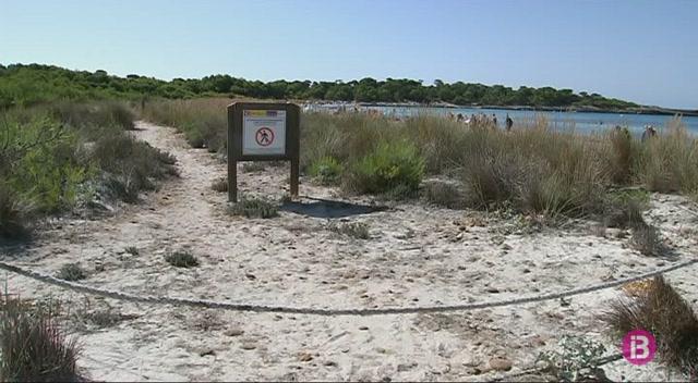 Passarel%C2%B7les+de+fusta+per+evitar+l%27erosi%C3%B3+dunar+a+quatre+platges+de+Menorca