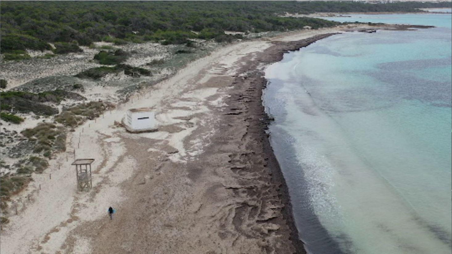 En+60+anys%2C+la+platja+des+Trenc+ha+perdut+fins+a+30+metres+de+costa