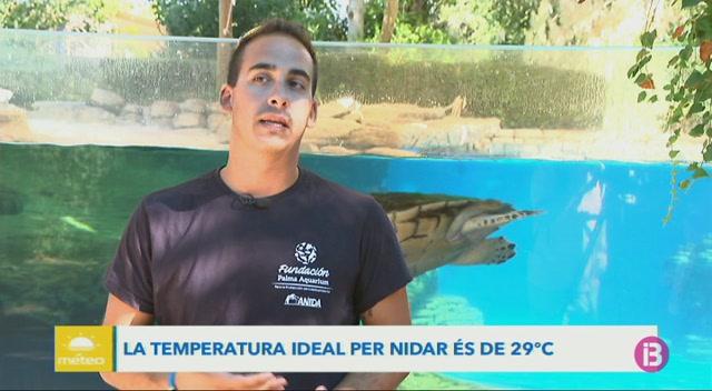 La+Fundaci%C3%B3+Palma+Aquarium+ha+posat+en+marxa+el+projecte+%26%238216%3BAnida%27