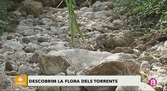 Descobrim+la+flora+dels+torrents
