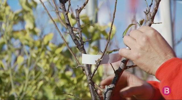 Paren%C3%B2stic+dels+arbres+fruiters+pel+desembre