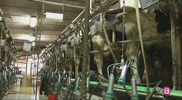 La+producci%C3%B3+de+llet+deixa+de+ser+la+principal+activitat+agr%C3%A0ria+a+Menorca