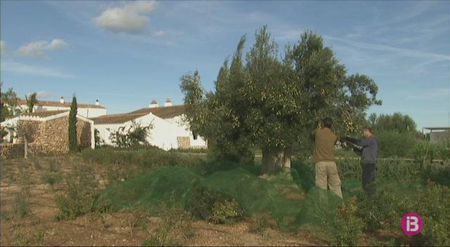 Vuit+associacions+de+Pime-Menorca+fan+front+com%C3%BA+contra+la+derogaci%C3%B3+de+la+Norma+Territorial