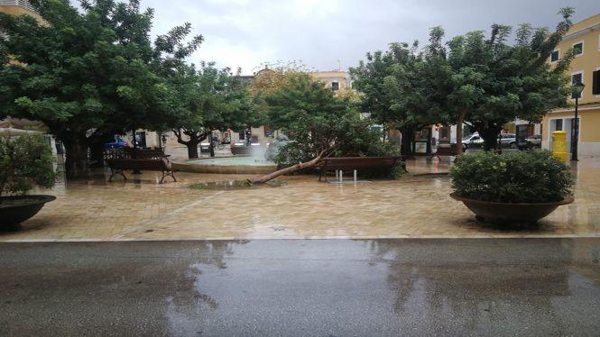 Rissaga+al+port+de+Ciutadella+i+arbres+caiguts+per+la+tempesta
