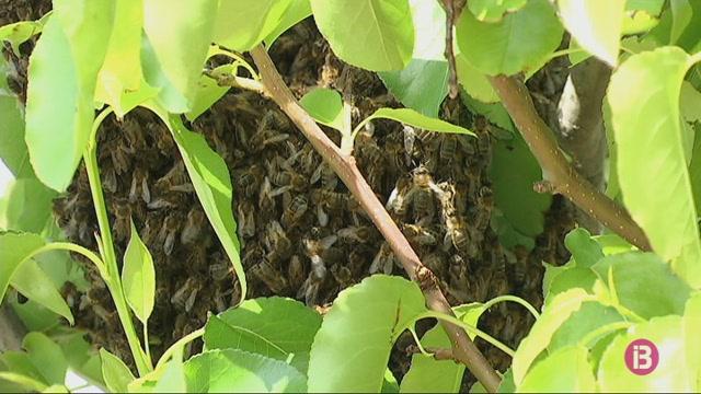 4000+abelles+s%27instal%C2%B7len+davant+del+bar+Ca%27n+Vermut+de+Ma%C3%B3