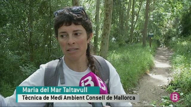 El+Consell+de+Mallorca+investiga+els+camins+p%C3%BAblics+per+fer-ne+un+cat%C3%A0leg