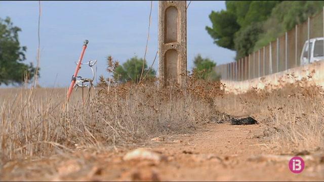 Augmenten+les+aus+que+moren+electrificades+a+Menorca