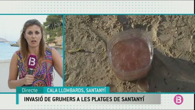 Els+grumers+han+enva%C3%AFt+les+platges+de+Santany%C3%AD