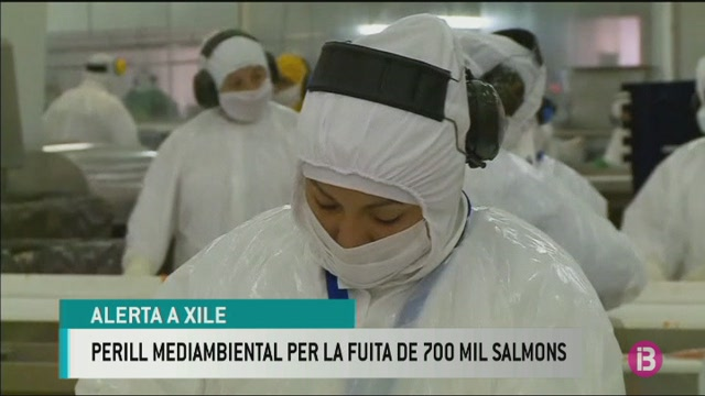 Alerta+mediambiental+a+Xile+per+la+fuita+de+700.000+salmons