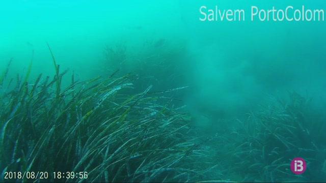 Salvem+Portocolom+denuncia+danys+%22greus%22+a+una+praderia+de+posid%C3%B2nia+causats+per+un+iot