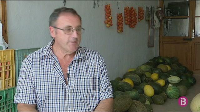 Els+vilafranquers+es+preparen+per+exhibir+els+melons+m%C3%A9s+feixucs+del+poble