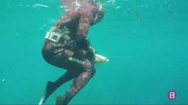 Uns+bussejadors+alliberen+una+tortuga+embolicada+a+una+xarxa+de+pesca