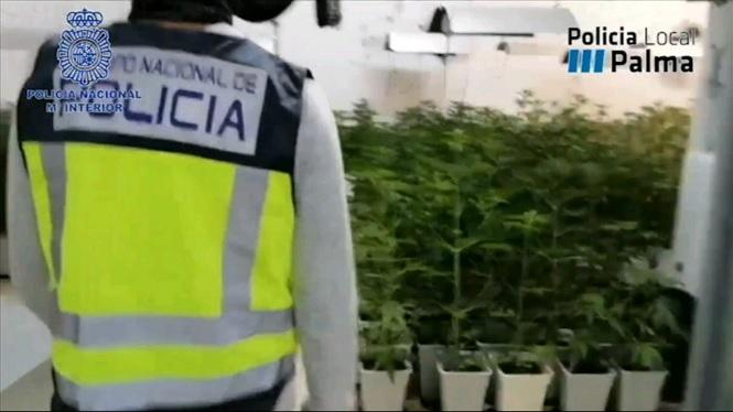 La+Policia+Nacional+desarticula+una+organitzaci%C3%B3+criminal+dedicada+al+tr%C3%A0fic+de+droga+a+Mallorca
