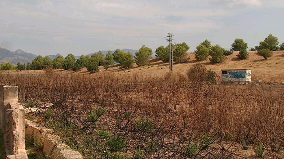 El+futur+Parc+Agrari+de+Palma+supera+la+primera+fase+i+ja+espera+el+pla+d%27acci%C3%B3